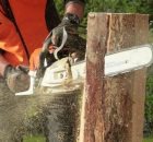 How to remove unnecessary trees in your garden and yard the right way